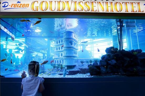 goldfishhotel