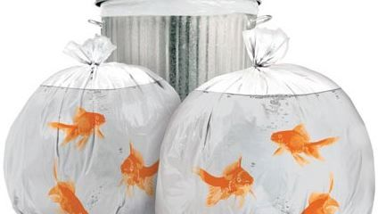 goldfishbags1.jpg