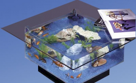 Aqua coffee table aquarium put your feet up on the fish tank for Labyrinth fish tank