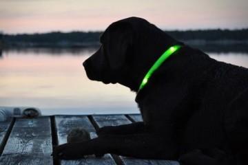 glowdoggie1