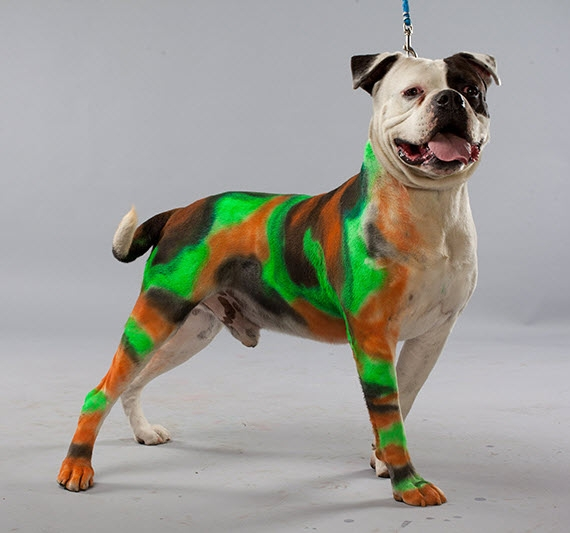 petpaint turns your dog into a walking art experiment. Black Bedroom Furniture Sets. Home Design Ideas