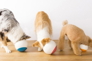 oppo-food-bowl-1