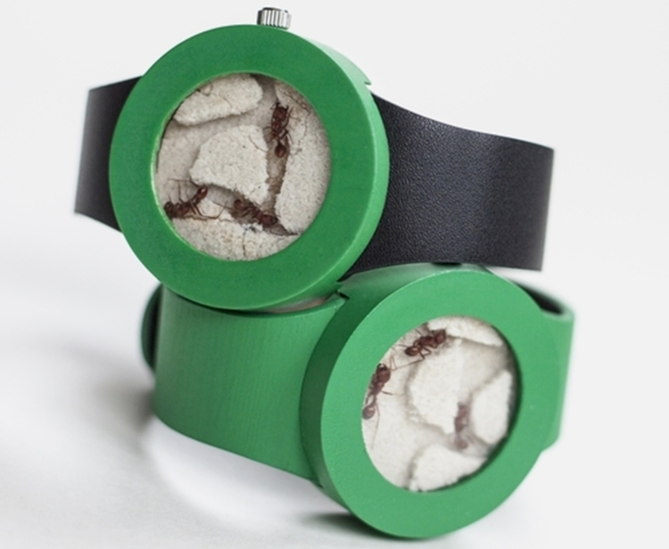 ant-watch-1