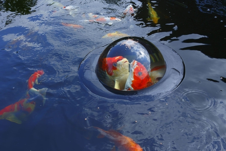 floating-fish-dome-1
