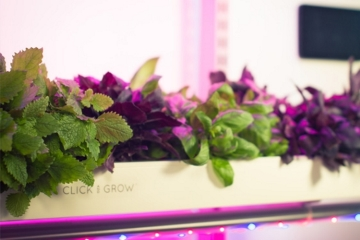 click-grow-smart-farm-3