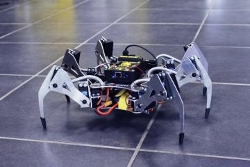 erle-spider-jpg