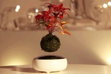 air-bonsai-1