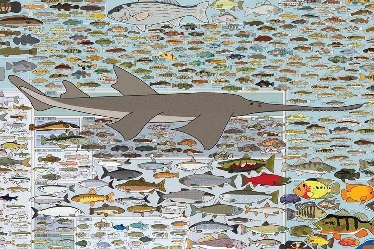 popchart-lab-freshwater-fish-america-print-2