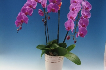 zombieorchids1