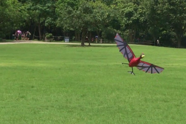 Rc Flying Pterodactyl