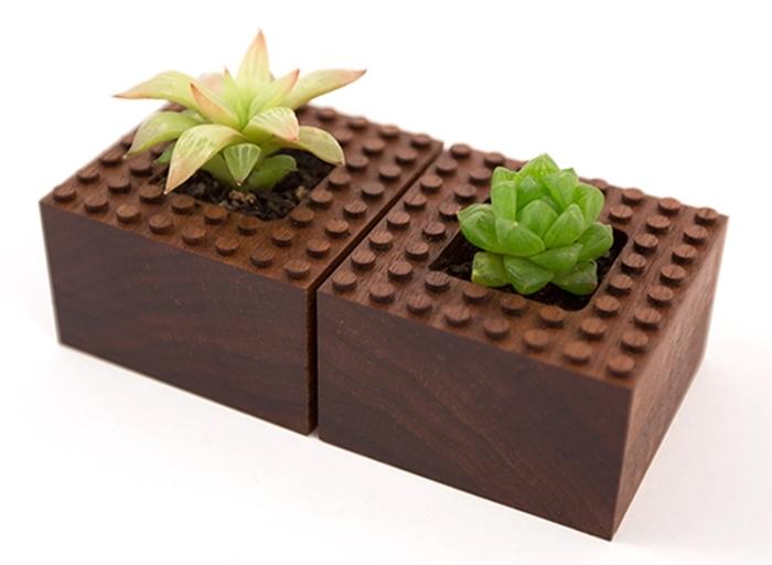 plant-experiment-1-3