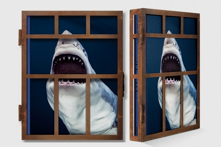 sharks-collectors-edition-1