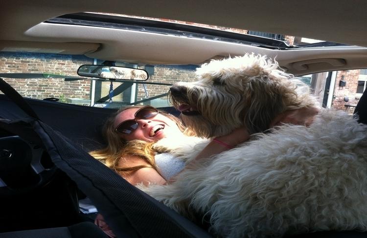 car-hammock-2